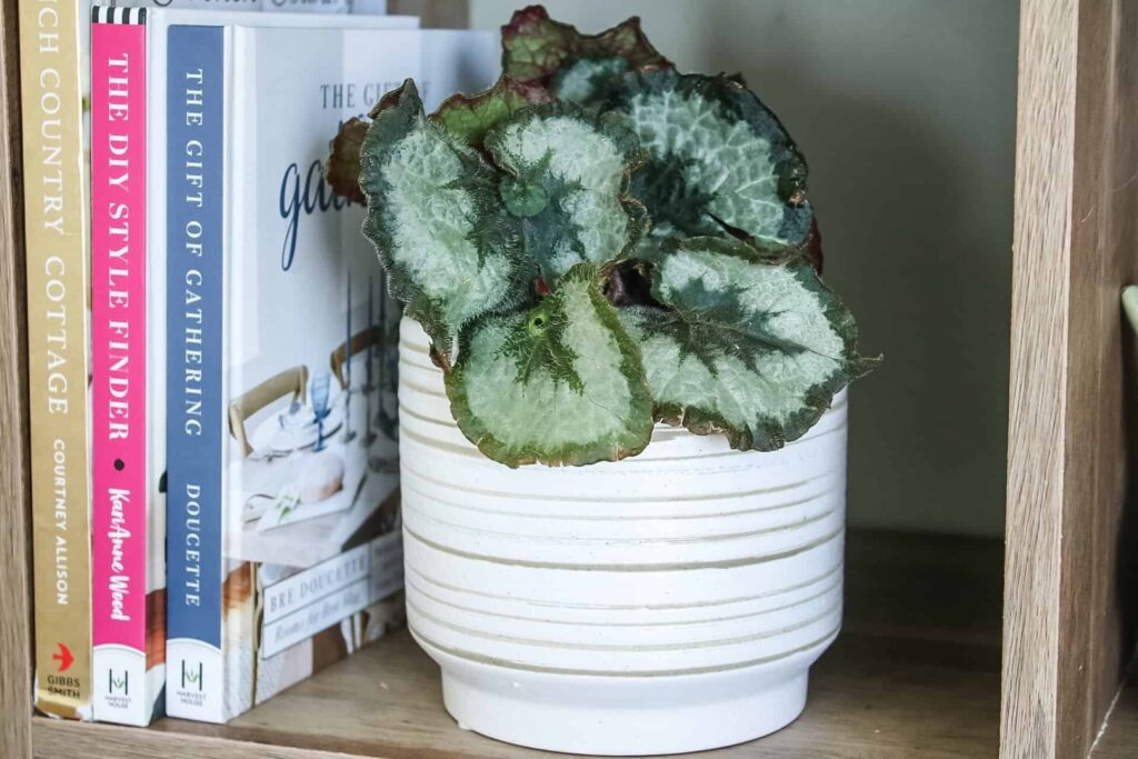 better homes and gardens planters