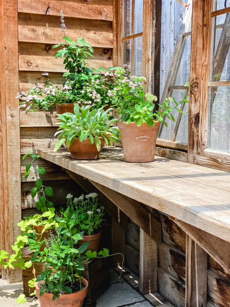greenhouse table at Magnolia Seed and Supply