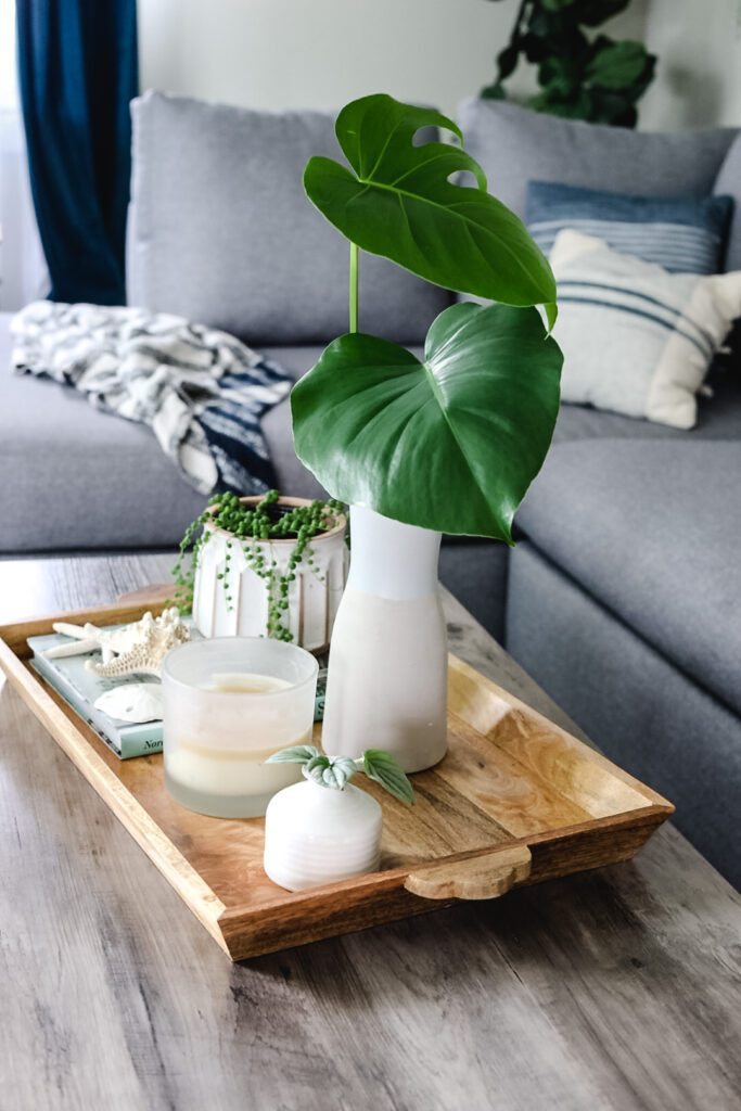 coffee table tray with plants